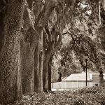 Forsythe Park, Savannah