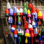 Colorful Lobster Floats