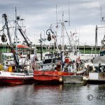 Fishermen's Terminal, Seattle