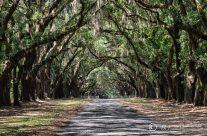 Avenue of Live Oaks