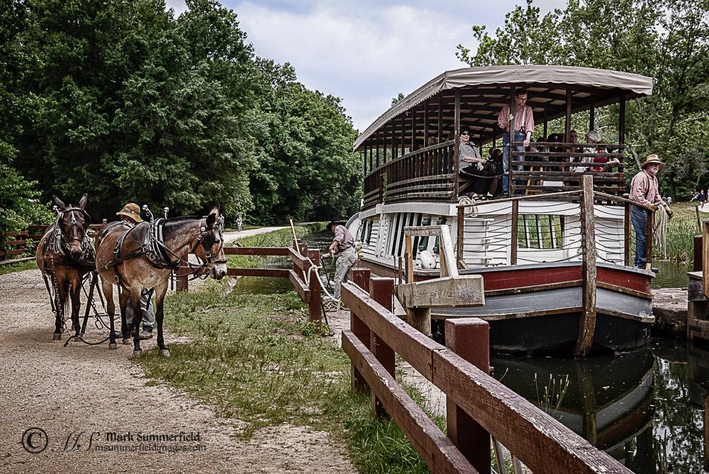C&O Canal Boat Mule Team