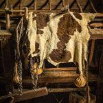 Drying Animal Hide