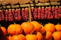 New Mexico Pumpkin Patch