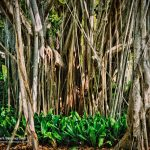 Ringling Museum Grounds and Gardens