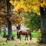 Fall Colors on a Horse Farm