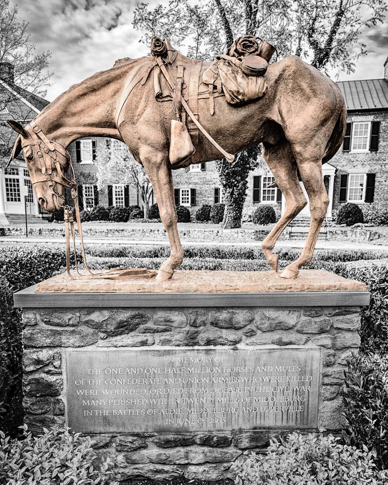 Civil War Cavalry Horse